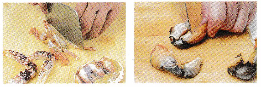 螃蟹全身部位图解